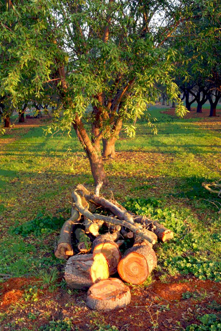 OrchardPosterWeb